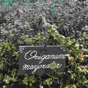 La Maggiorana, venduta spesso nei supermercati come Origano
