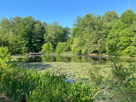 The Best Places to Plein Air Paint if You Live in Northern Virginia