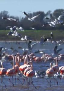 Birding in Córdoba