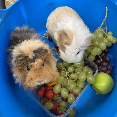 Felicity and Abbie - Breakfast Buffet