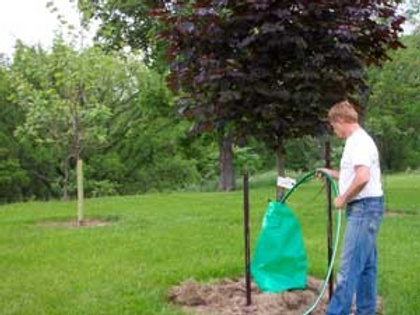 Tree Watering Bag Qty 5