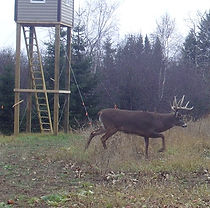 trail camera management
