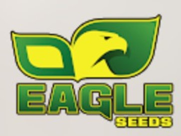 Eagle Seed