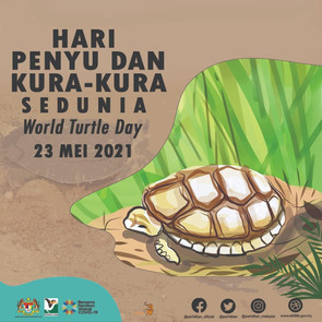 World Turtle Day 2021