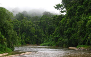 FMT News: RM60 mil for environment protection good but give us details, say groups