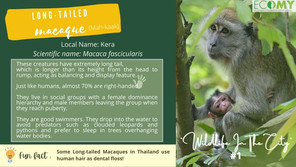 Wildlife in the City #1 - Long-Tailed Macaques