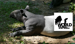 ECOMY CELEBRATES WORLD TAPIR DAY