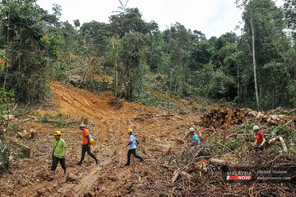 More needed to safeguard reserves, activists say as 8,000-year-old forest faces loss of ...