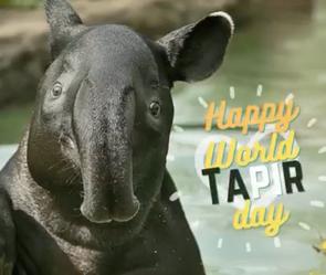 Happy Tapir Day 2021
