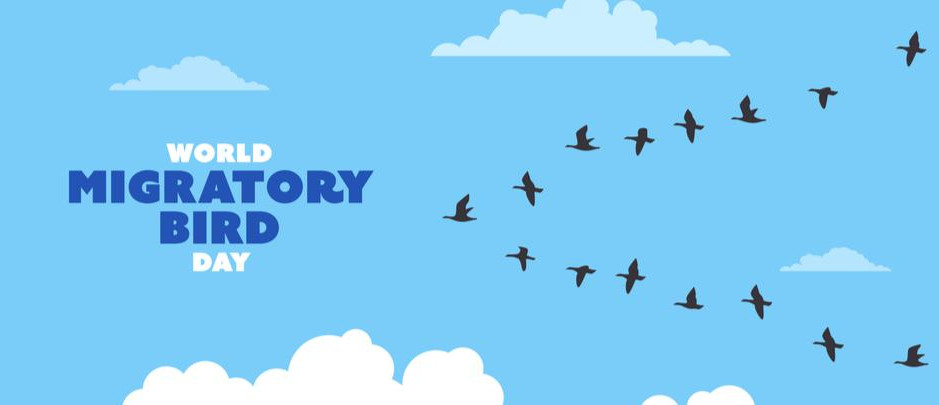 BIRDS FLYING (THROUGH) MALAYSIA