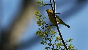 TheSunDaily: Malaysia selected as Important Bird Area: Tourism Malaysia