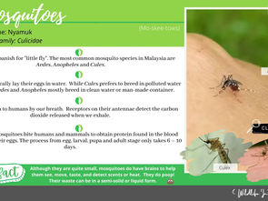 Wild Life in the City #4 - Mosquitoes