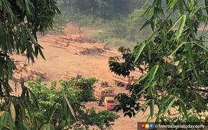 FMT: Legal logging biggest threat to tigers, says green activist