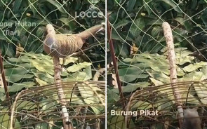 Environmentalists in a flap over Tourism Selangor's bird trapping video
