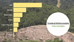 Tropical Deforestation - the Causes