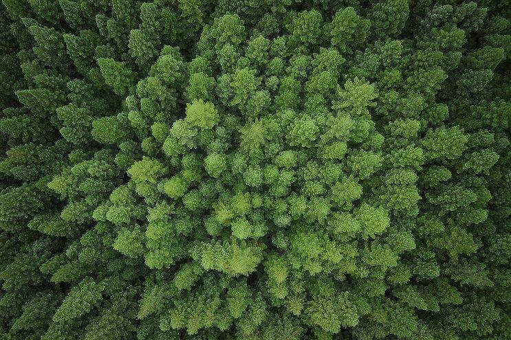 Warburton-Redwood-Forest-Victoria-Drone-