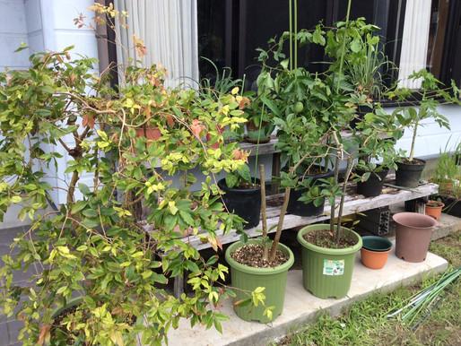 癒しの植物達が家に。