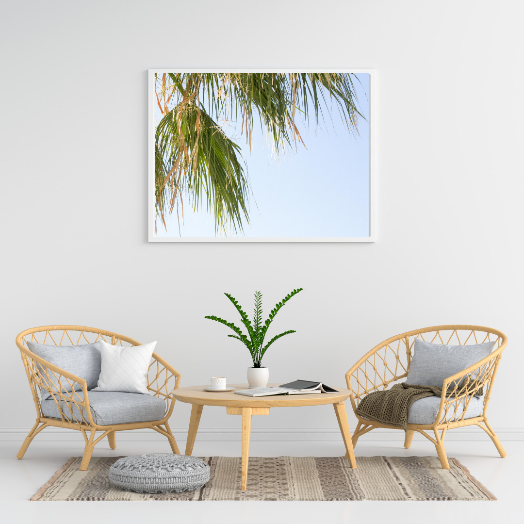 California Palm Leaves