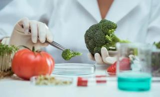 analise-brotamologica-dos-alimentos-ente