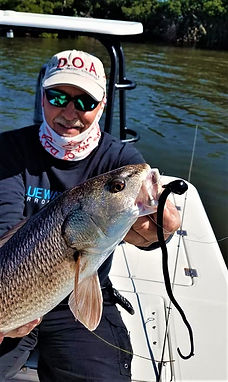 Tampa Bay redfish have been crushing the