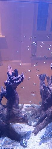 Freshwater Hardscape Aquarium, Chigwell, Essex