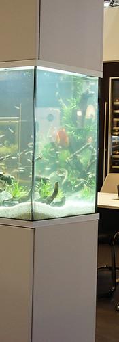 Planted Aquarium Poggenpohl GDL 2012