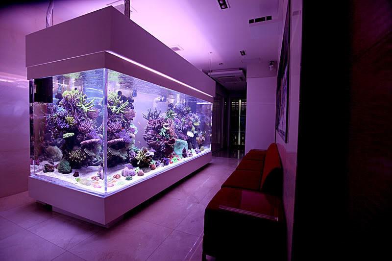 Ching Chai Reef tank