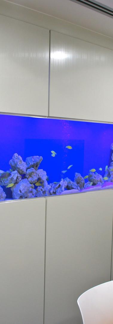Freshwater Aquarium, Birmingham