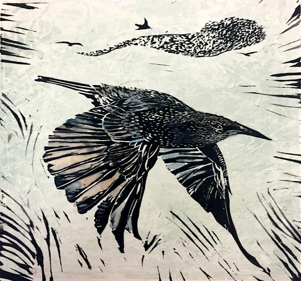 Starling #1