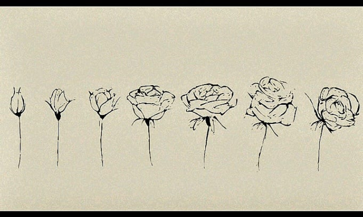 the rose cycle