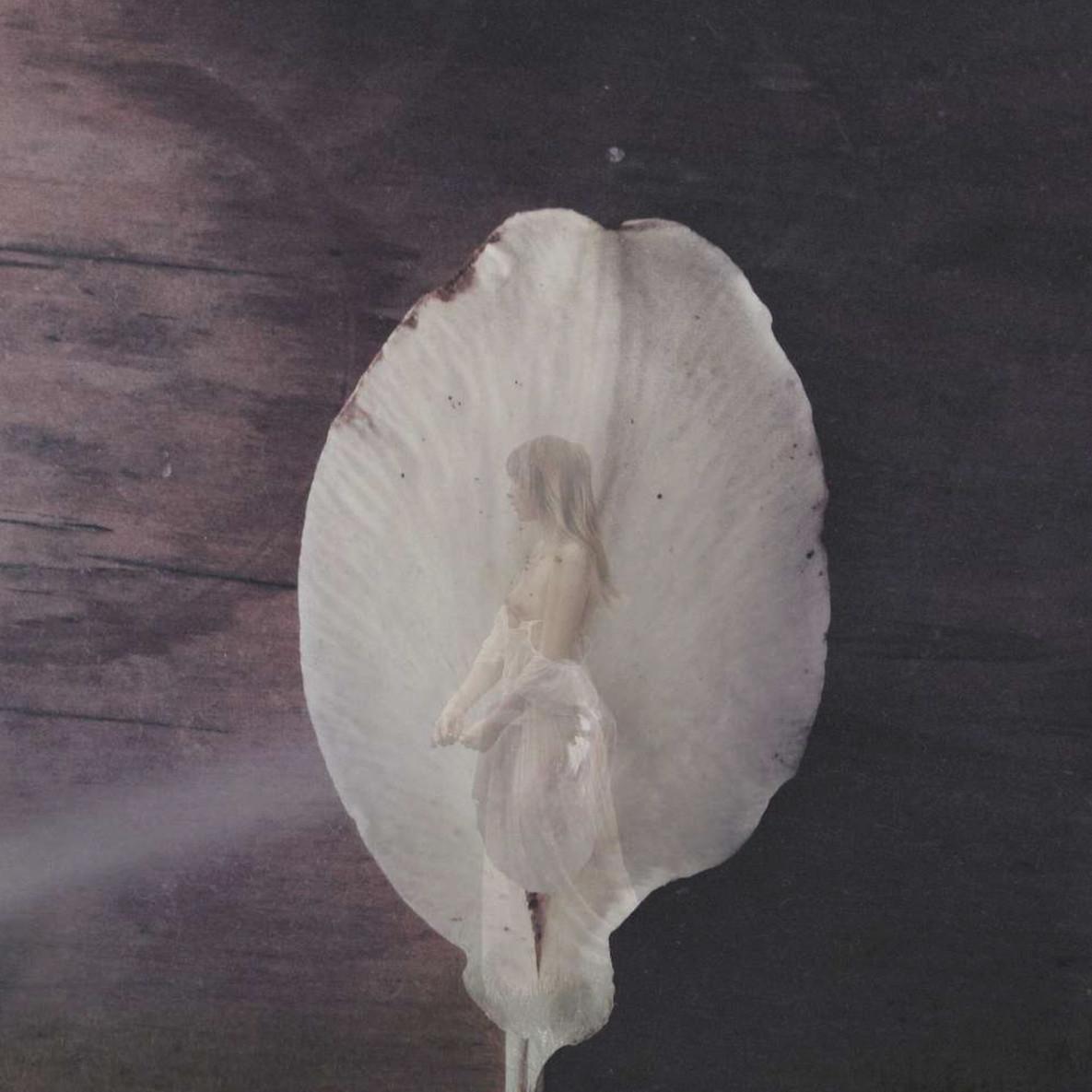 Lilium giganteum
