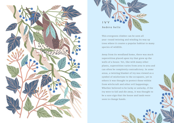 The Painted Woodland  Ivy