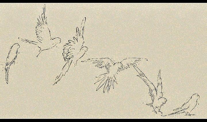 Olive the bird