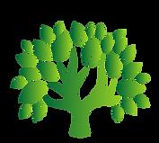 Tree_Transparent.png