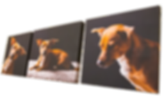 PhotoCanvases by Stuart Ware Photography