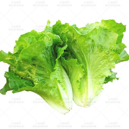 romaine lettuce 1kg  生菜(1斤)