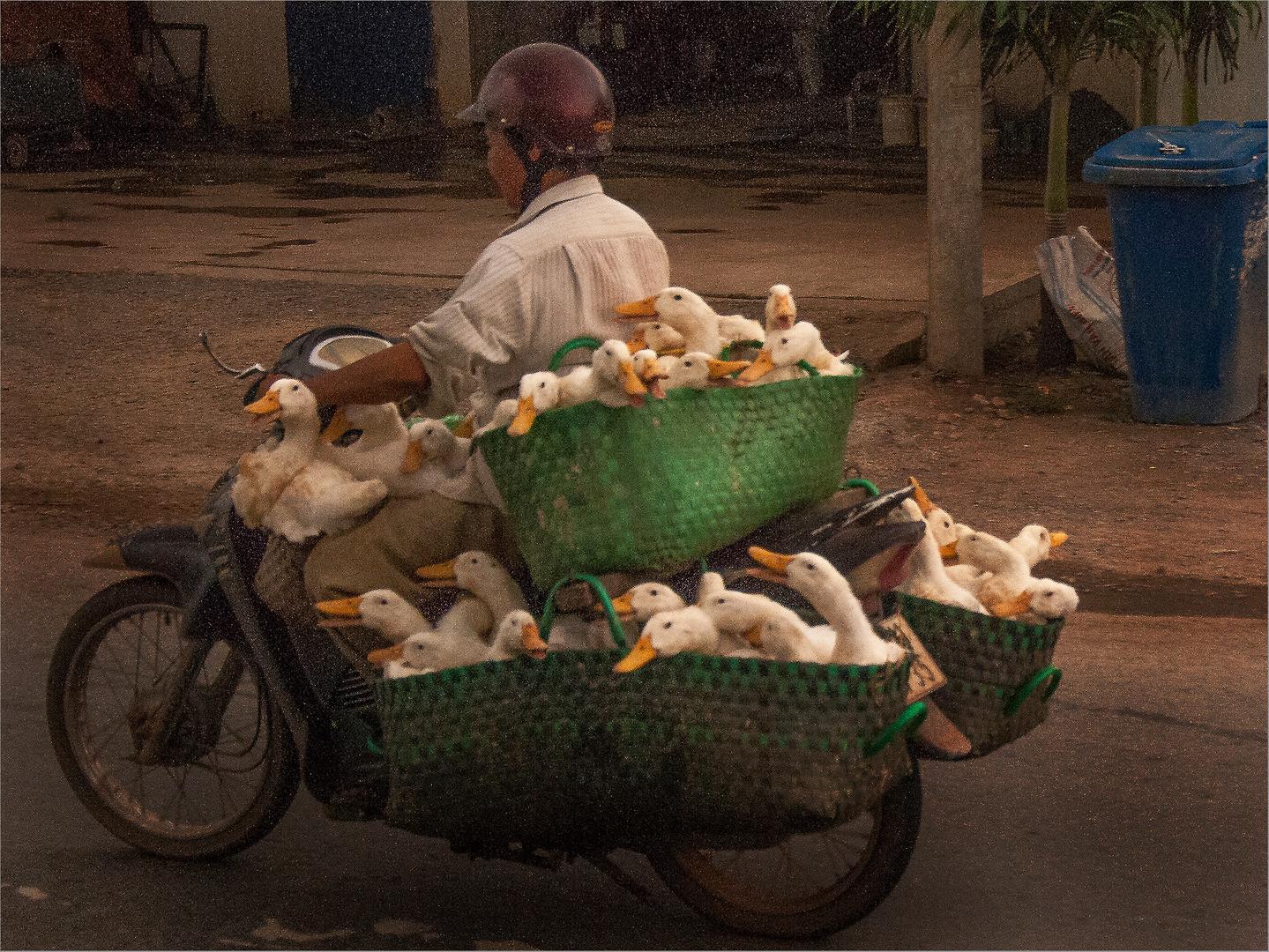 Ducks for Market