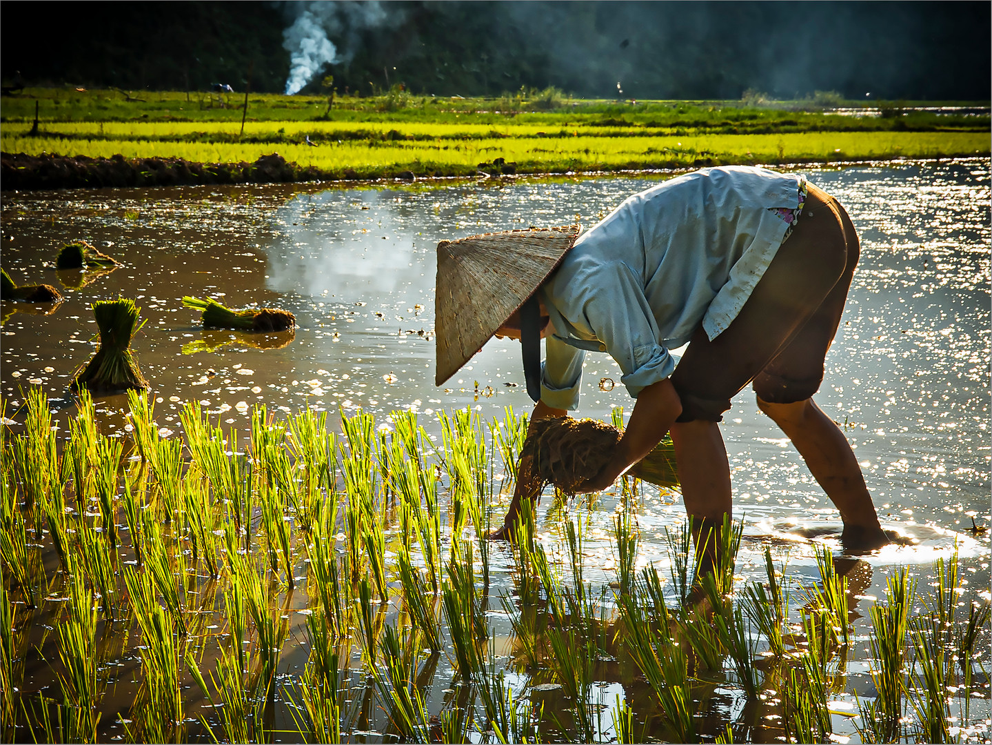 Rice Planting #1