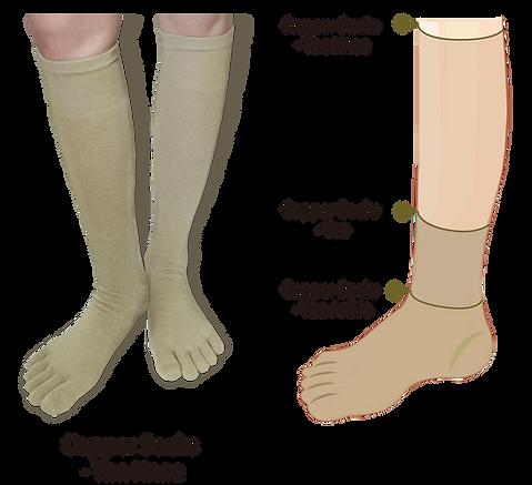 Photo-toe socks_2-2.png