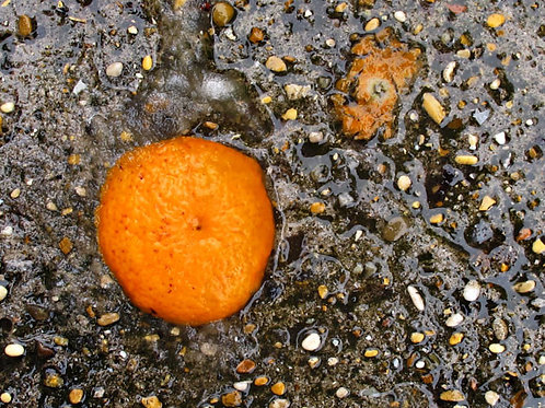 Arancio schiacciato