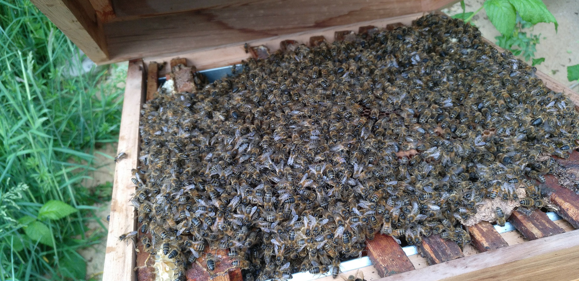 Our essential pollinating bees