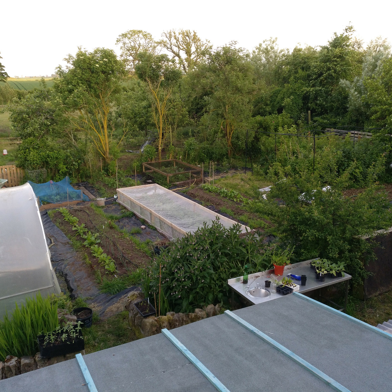 Veg garden starting to take shape