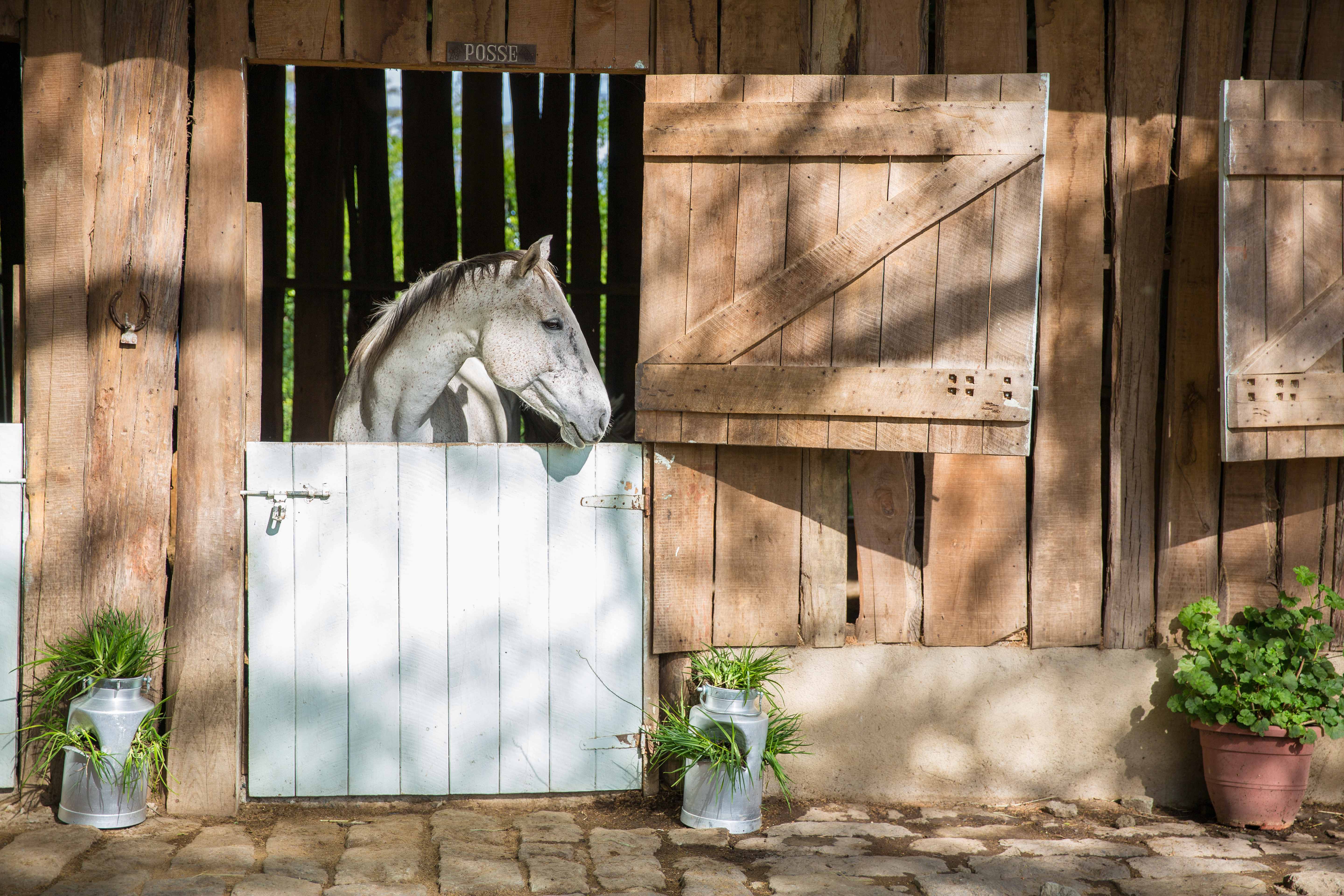 nhg-tsc-solio-stables-1