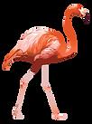AMIGOS_DOMINO_NIGHT_Flamingo.png
