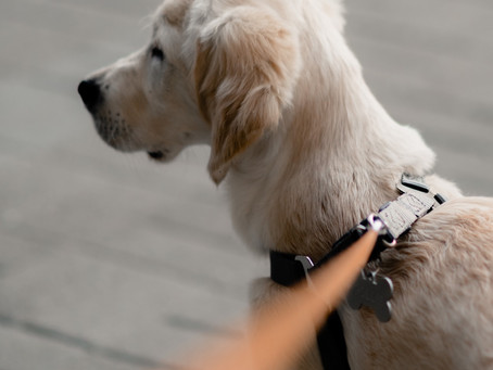 January is National Walk Your Dog Month!