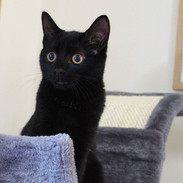 Tilly, Tristan and Sarah's cat, she is only 5 months old, and will be being spayed very soon!