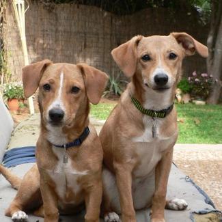 עכשיו כשאני בת 73 אני תוהה אם גם אני הייתי מוותרת על ווניה היפה לטובת שני כלבי תחש.