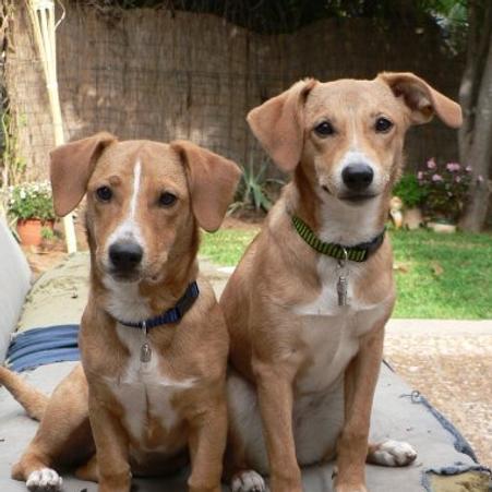 dvojče Dogs