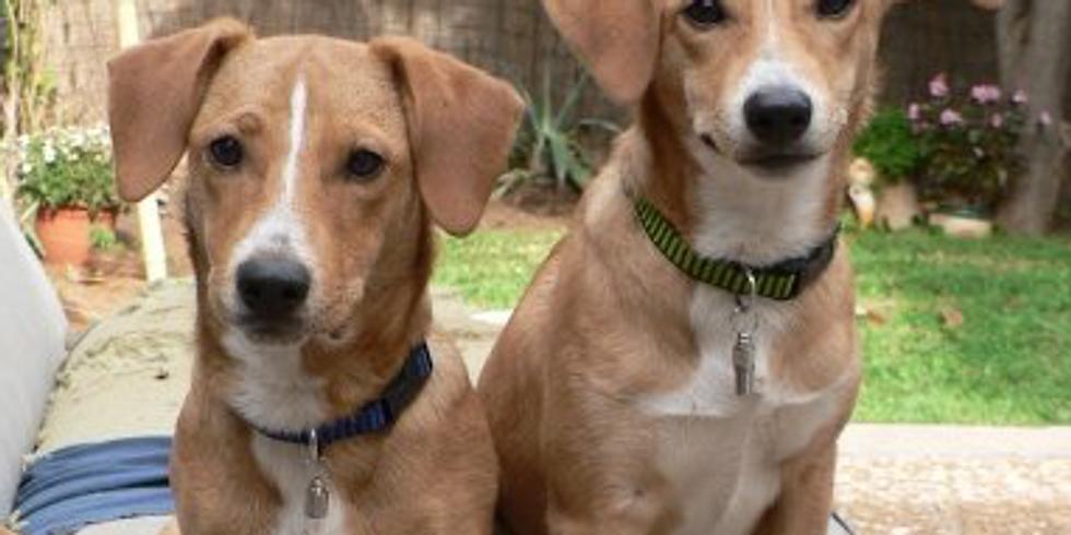 Puppy Love - Karma Yoga Community Event