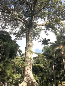Jardim Botânico, refúgio verde